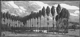 wood-engraving of Poplars in France